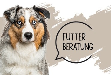 Futterberatung für Hunde in Stuttgart