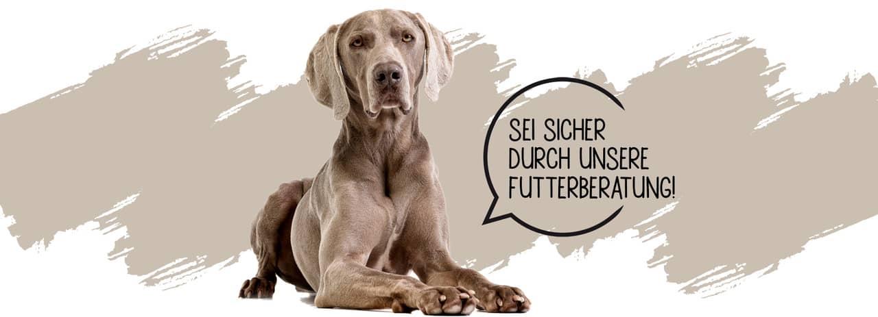 Ernährungsberatung für Hunde Stuttgart