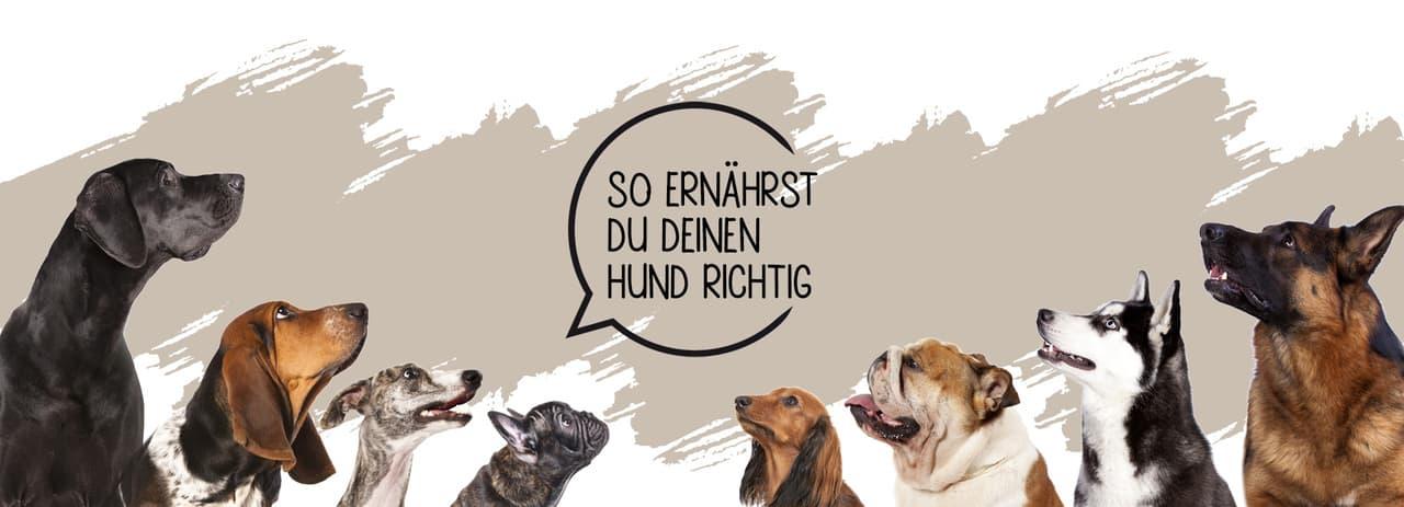 Richtige Hundeernährung-Stuttgart