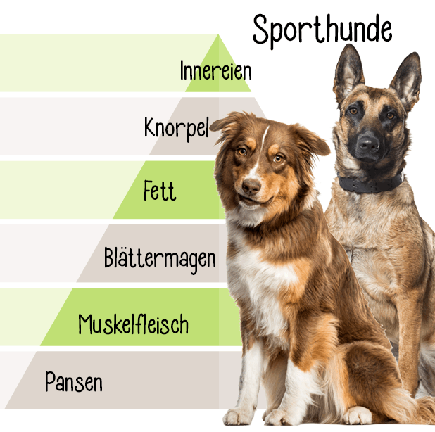 Hundefutter für Sporthunde Stuttgart