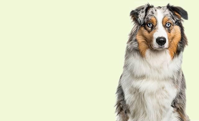 Kauartikelsortiment für Hunde-Rindersnack-Stuttgart