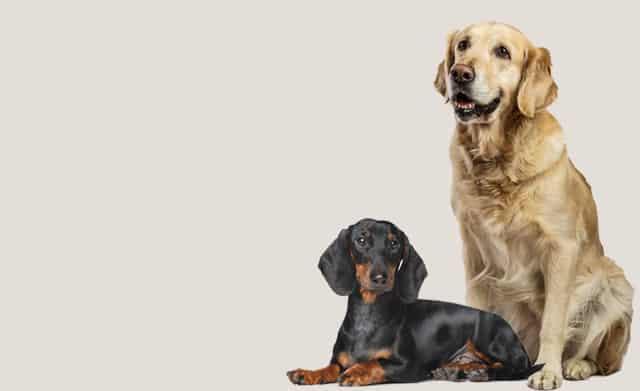 Gesundes Hundefutter für ältere Hunde in Stuttgart
