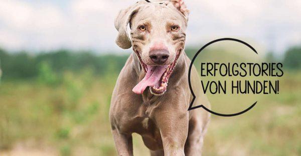 Erfolge-gesundes Hundefutter-Stuttgart